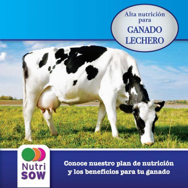 Lechero 20% Alta...