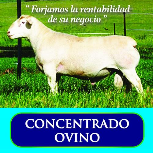 Concentrado Ovino