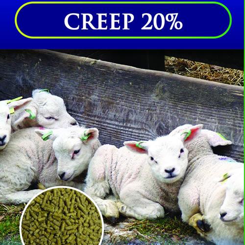Creep 20%